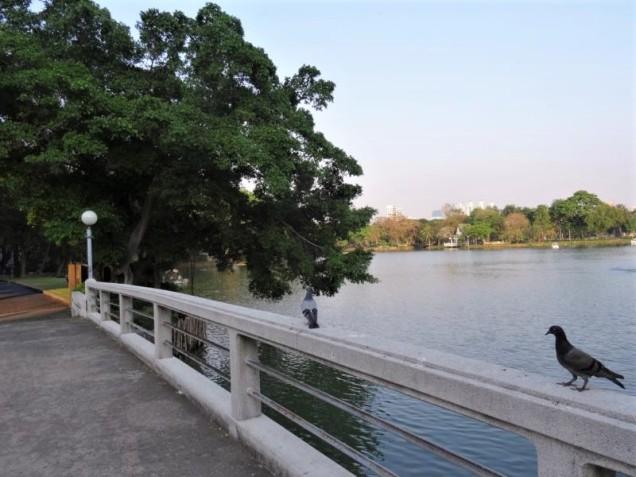 K800_Lumphini Park (3)
