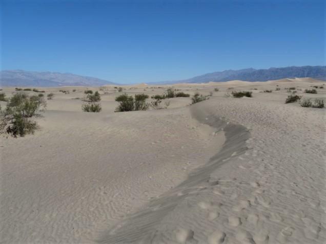 Mesquite Flat Sand Dunes 1