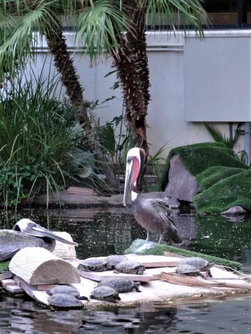 K1024_Flamingo Hotel 2
